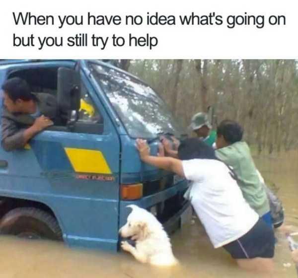 Hilarious animal memes