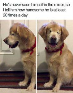 hilarious-animal-memes (16)