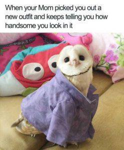 hilarious-animal-memes (18)