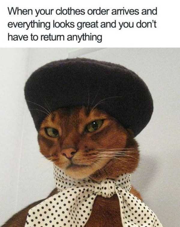 hilarious-animal-memes (20)