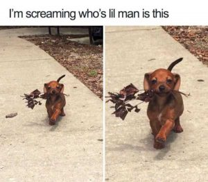 hilarious-animal-memes (25)