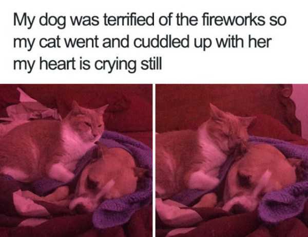 hilarious-animal-memes (26)