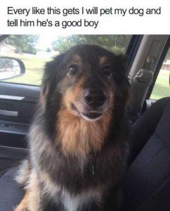 hilarious-animal-memes (27)