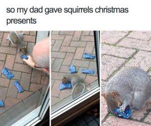 hilarious-animal-memes (28)