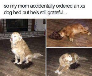 hilarious-animal-memes (29)