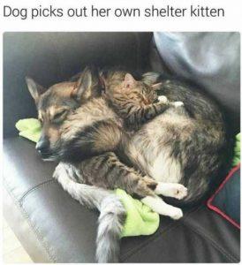 hilarious-animal-memes (3)