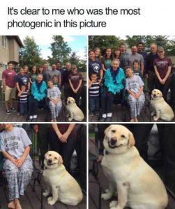 hilarious-animal-memes (31)