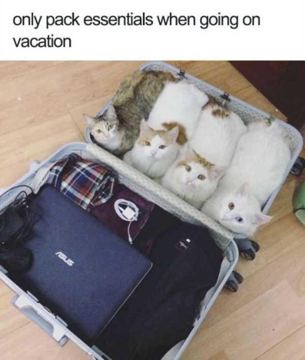 hilarious-animal-memes (36)