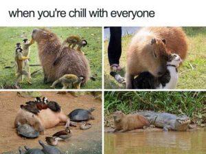 hilarious-animal-memes (38)