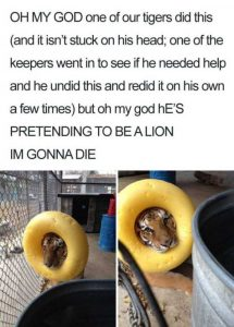 hilarious-animal-memes (39)