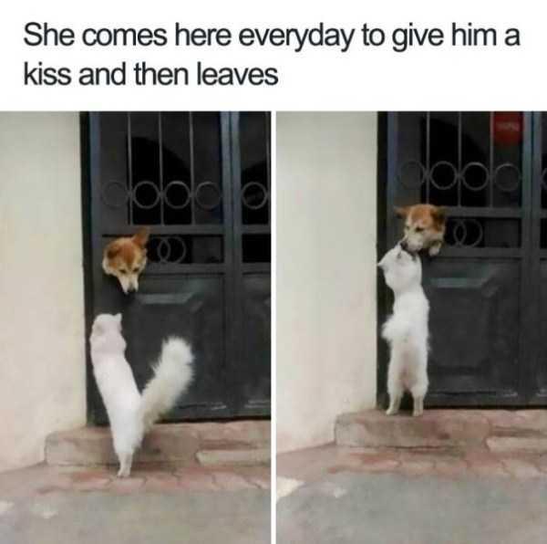 hilarious-animal-memes (40)