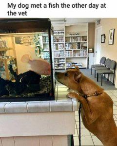 hilarious-animal-memes (41)