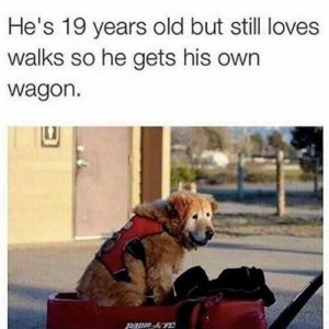 hilarious-animal-memes (42)