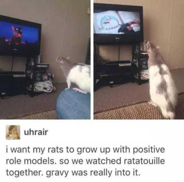 hilarious-animal-memes (44)