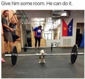 hilarious-animal-memes (46)