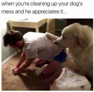 hilarious-animal-memes (47)