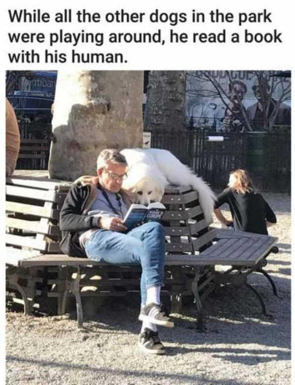 hilarious-animal-memes (5)