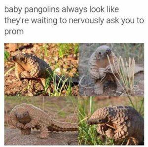 hilarious-animal-memes (50)