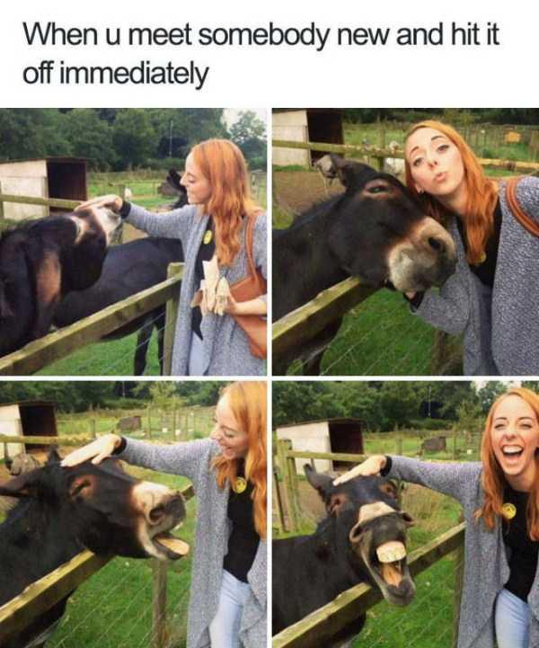 hilarious-animal-memes (8)