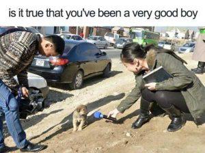 hilarious-animal-memes (9)