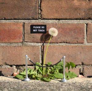 nature-themed-street-art (39)