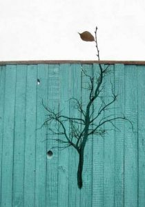 nature-themed-street-art (8)