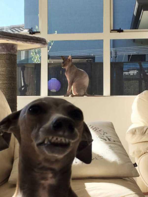 photobombing-dogs (13)