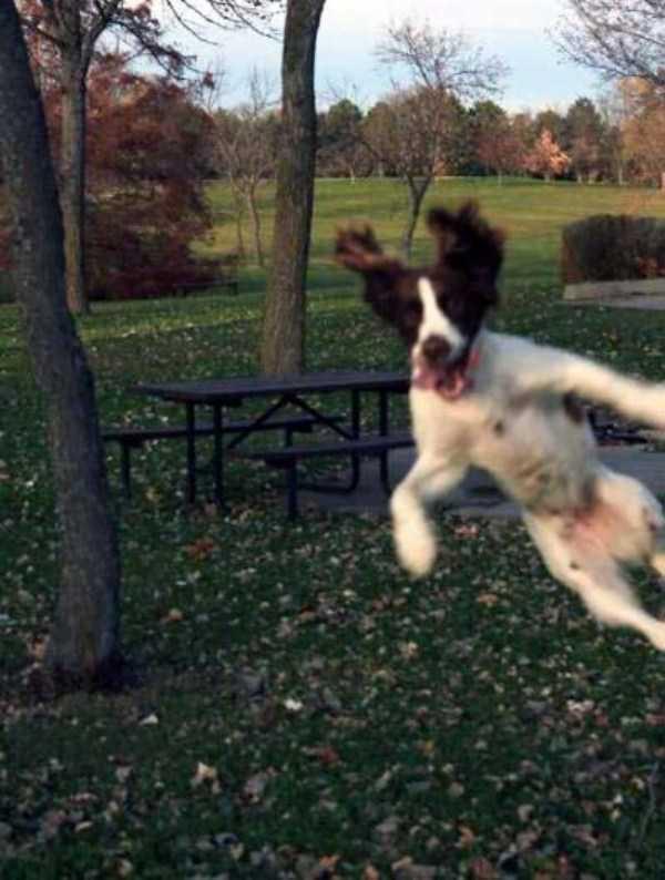 photobombing-dogs (14)