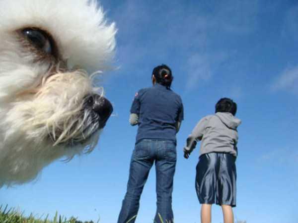 photobombing-dogs (17)