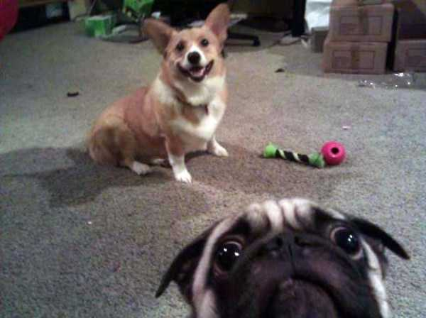 photobombing-dogs (2)