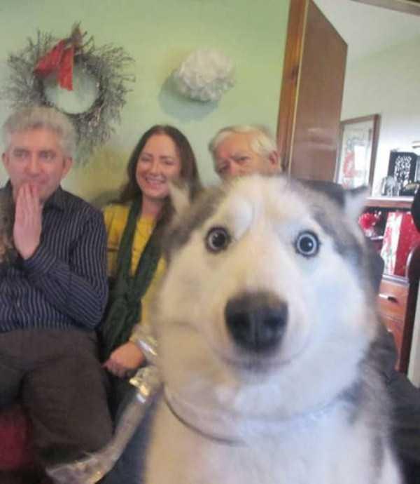 photobombing-dogs (27)