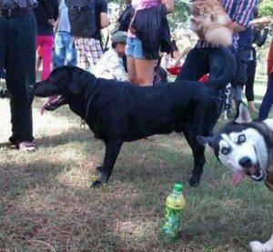 photobombing-dogs (28)