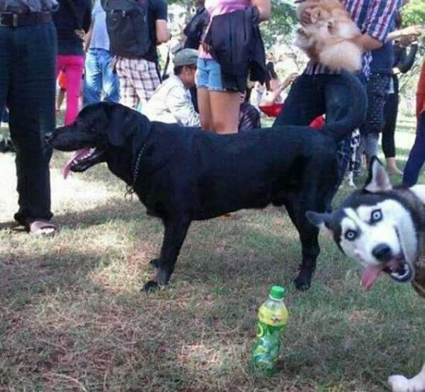 photobombing-dogs (28)
