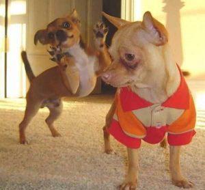 photobombing-dogs (31)