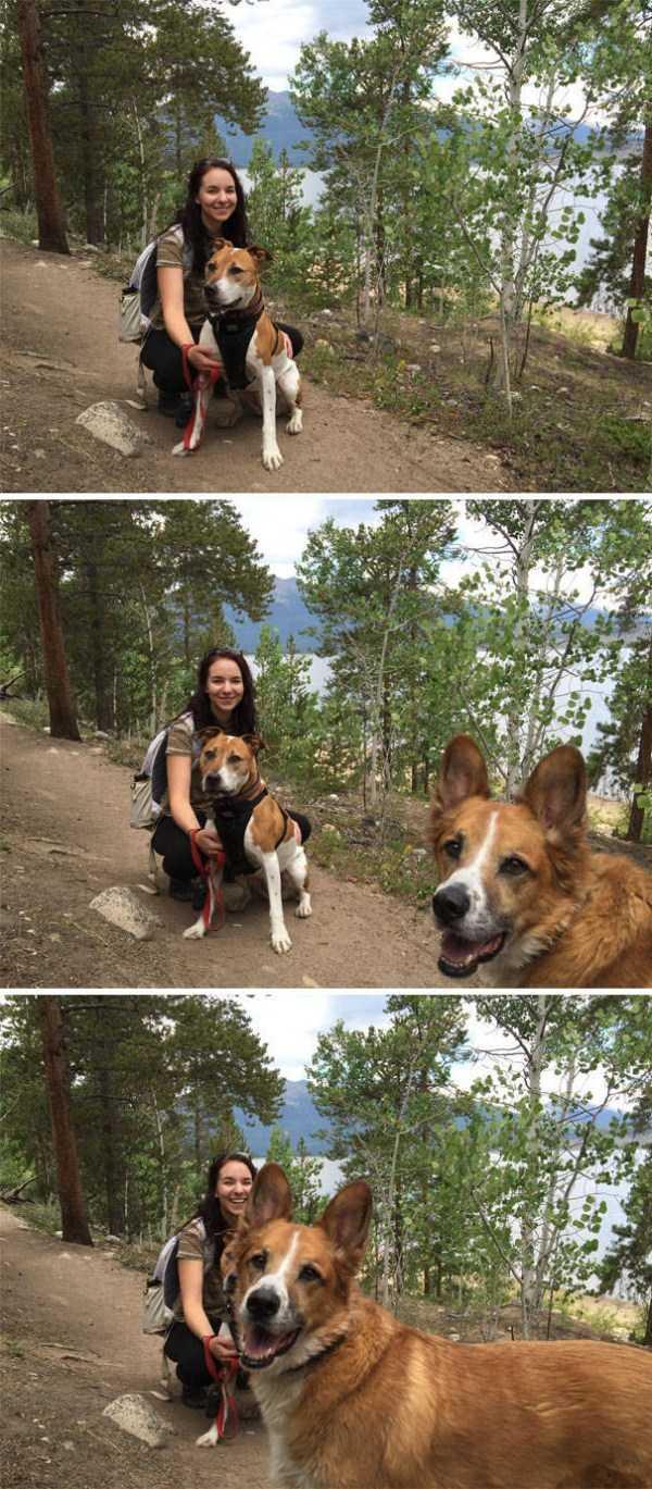 photobombing-dogs (33)