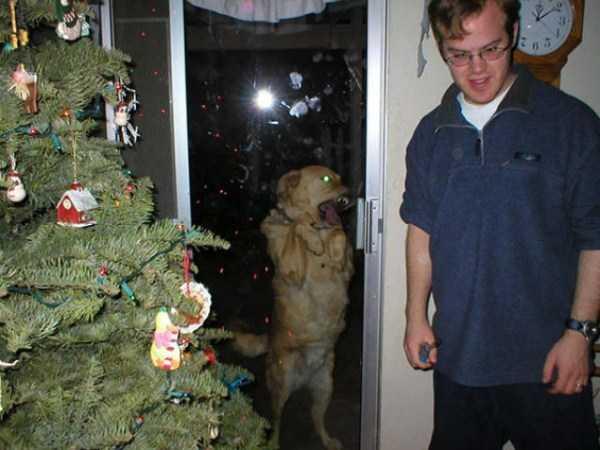 photobombing-dogs (39)