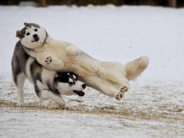 photobombing-dogs (41)