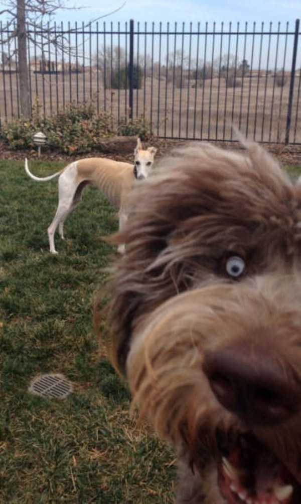 photobombing-dogs (43)