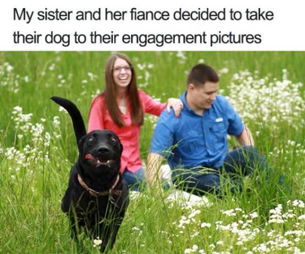 photobombing-dogs (48)