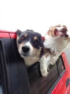 photobombing-dogs (8)