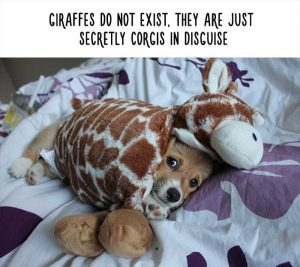 fake-facts-about-animals (10)