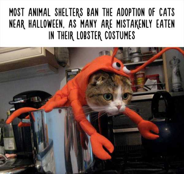fake-facts-about-animals (12)