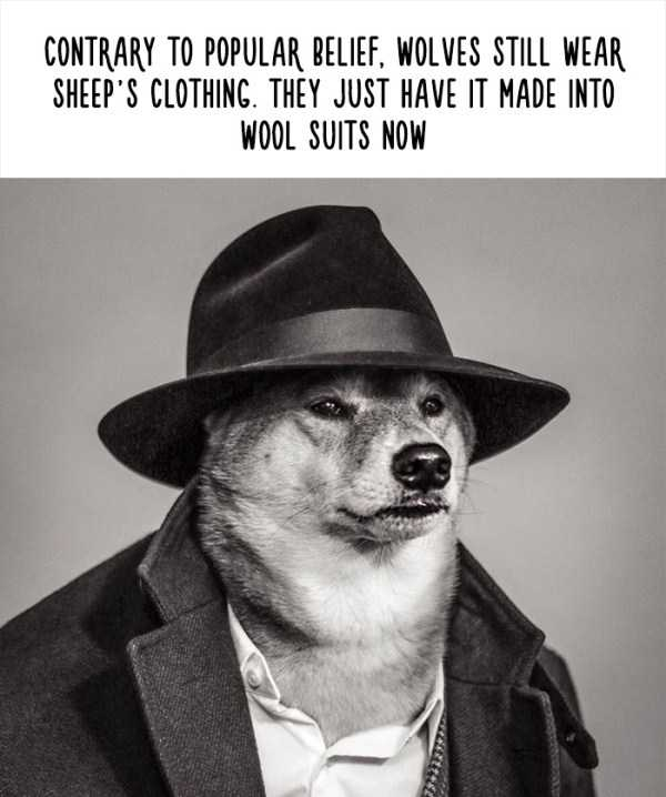 fake-facts-about-animals (17)