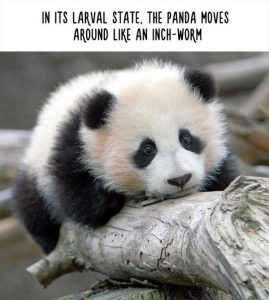 fake-facts-about-animals (18)