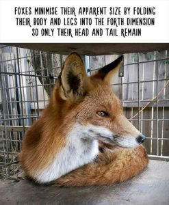 fake-facts-about-animals (19)