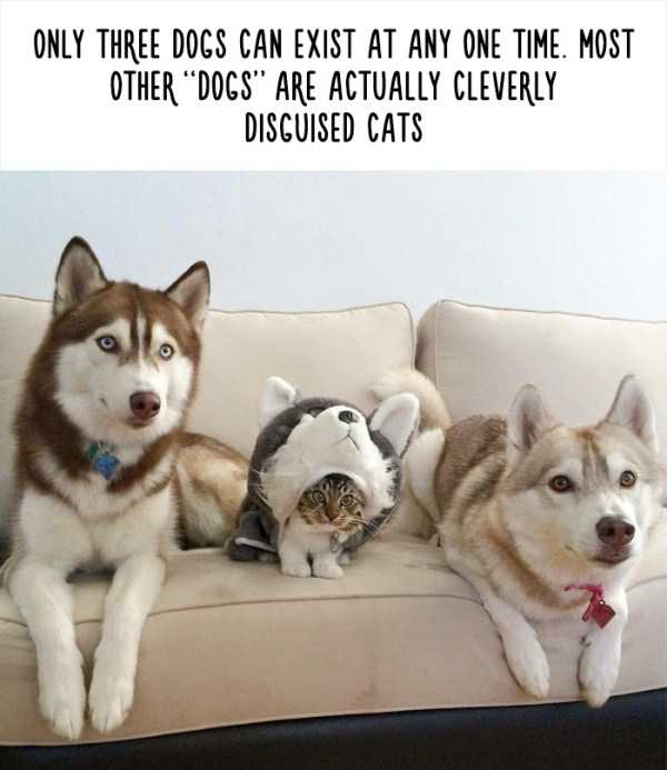 fake-facts-about-animals (20)
