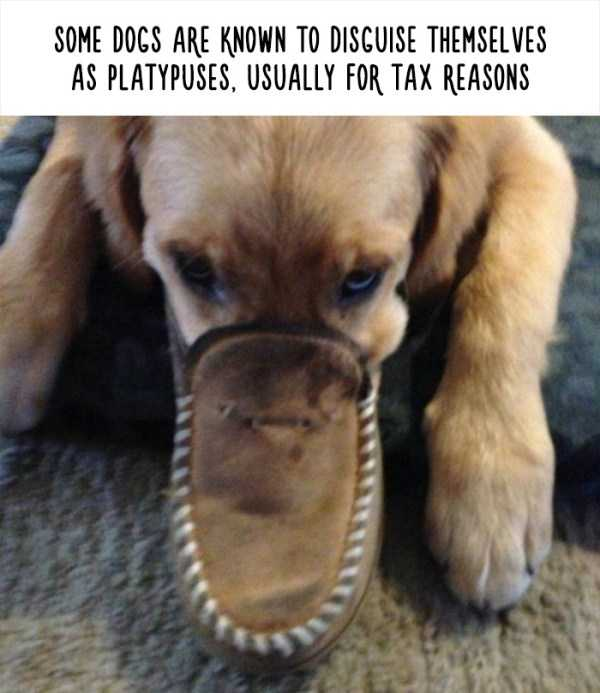 fake-facts-about-animals (24)