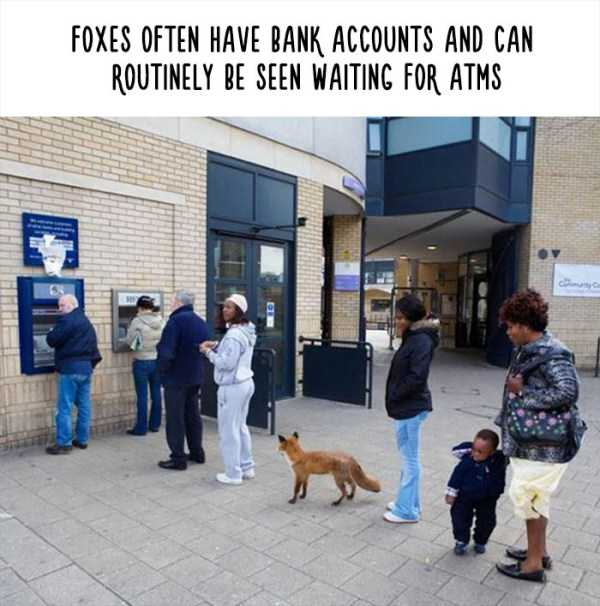 fake-facts-about-animals (25)