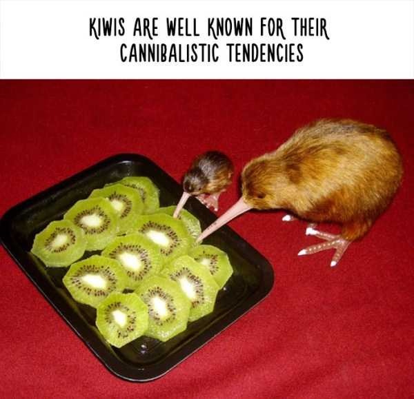 fake-facts-about-animals (26)