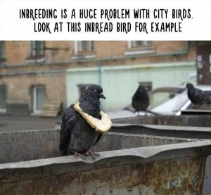 fake-facts-about-animals (27)